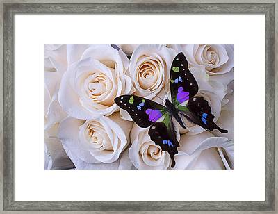 Beautiful Black Winged Butterfly Framed Print by Garry Gay