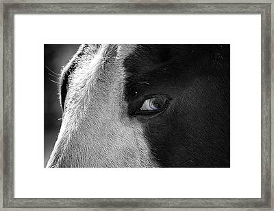 Beautiful Blind Soul Horse Framed Print