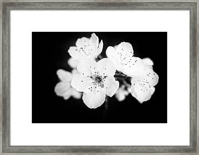 Beautiful Blossoms In Black And White Framed Print