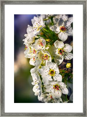 Beautiful Blossoms Framed Print by Sennie Pierson
