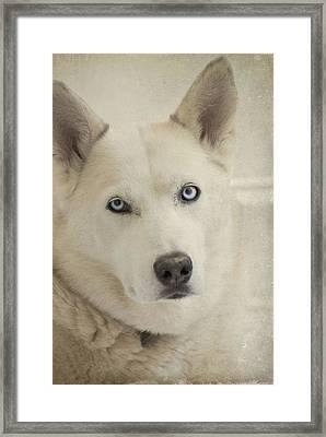 Beautiful Blue Eyes Framed Print by Cindy Rubin