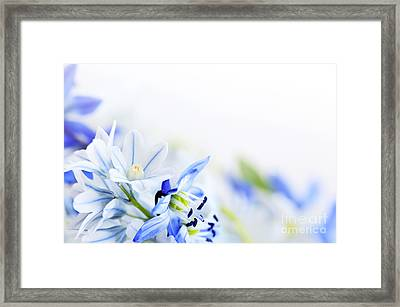 Beautiful  Blue Flower Art Framed Print by Boon Mee