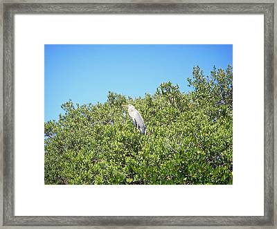 Beautiful Blue Heron Framed Print by Aimee L Maher Photography and Art Visit ALMGallerydotcom