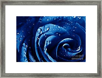 Beautiful Blue Roses Framed Print by Boon Mee