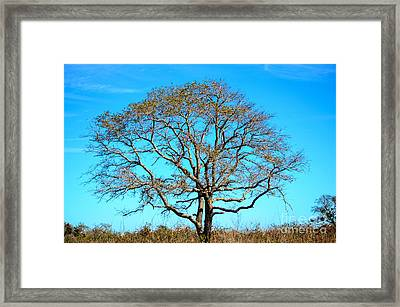 Beautiful Branching Framed Print by Debra Martz