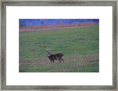 Beautiful Buck In The Smoky Mountains Framed Print by Dan Sproul