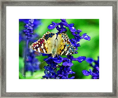 Beautiful Butterfly On A Flower Framed Print