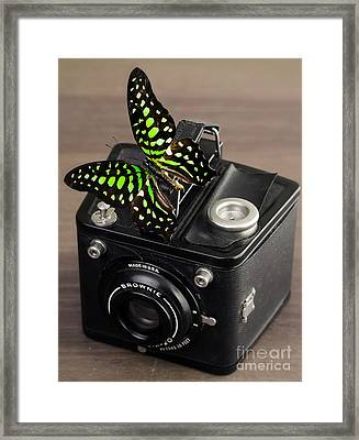Beautiful Butterfly On A Kodak Brownie Camera Framed Print by Edward Fielding
