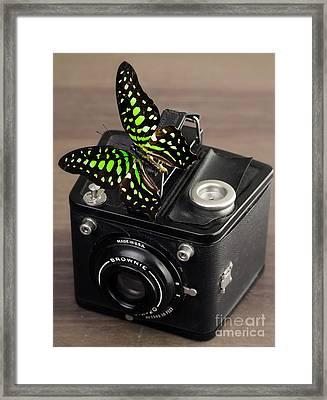 Beautiful Butterfly On A Kodak Brownie Camera Framed Print