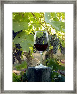 Beautiful Cabernet Framed Print