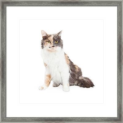 Beautiful Calico Cat Sitting Framed Print
