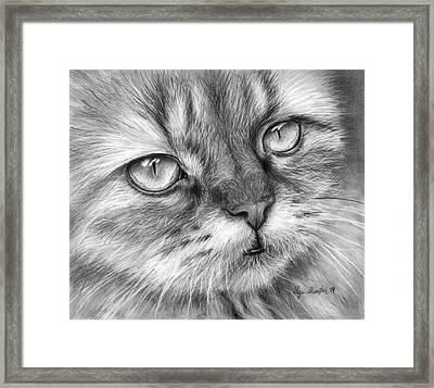 Beautiful Cat Framed Print