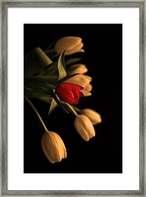 Beautiful Clear Bronzed Effect Tulip Bouquet Framed Print