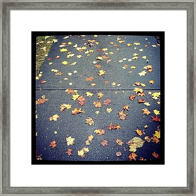 Beautiful Colours Of Fall Framed Print