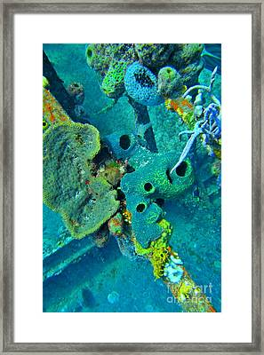 Beautiful Coral  Framed Print