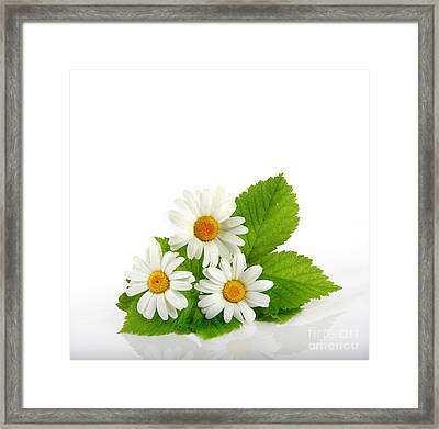 Beautiful Daisy Flowers Framed Print by Boon Mee