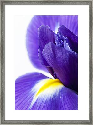 Beautiful Dark Purple Iris Flower Framed Print