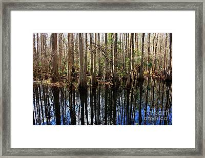 Beautiful Day In The Cypress Swamp Framed Print by Carol Groenen