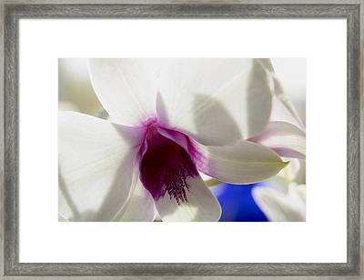 Beautiful Dendrobium Orchid Framed Print by Dana Moyer