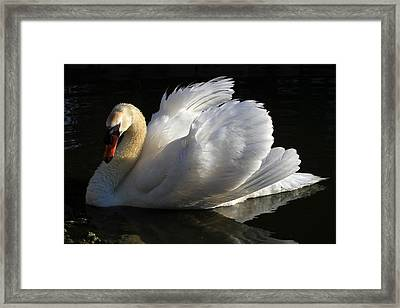 Beautiful Display Framed Print by Donna Kennedy
