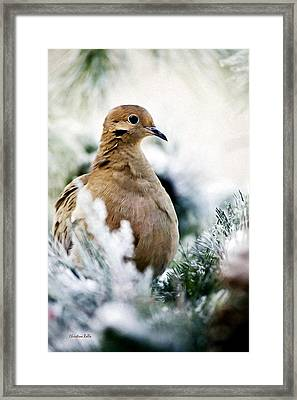 Beautiful Dove Framed Print