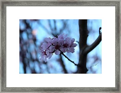 Beautiful Dreamer Framed Print by Kume Bryant