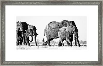 Beautiful Elephant Black And White 55 Framed Print