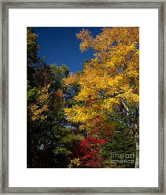 Beautiful Fall Framed Print by Dale Nelson