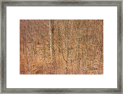 Beautiful Fine Structure Of Trees Brown And Orange Framed Print by Matthias Hauser