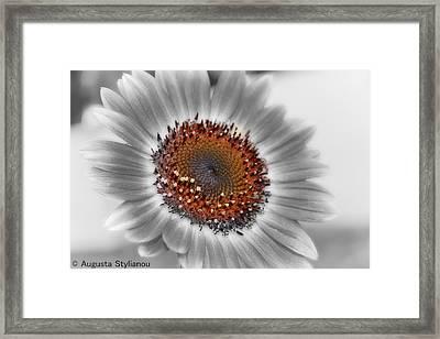 Beautiful Flower Framed Print by Augusta Stylianou