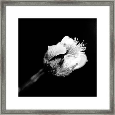 beautiful flower BW Framed Print