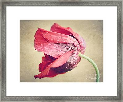 Beautiful Flower Framed Print by Diana Kraleva