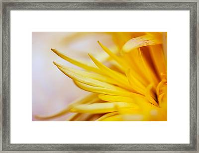 Spring Flower - Nature Photography Framed Print by Modern Art Prints