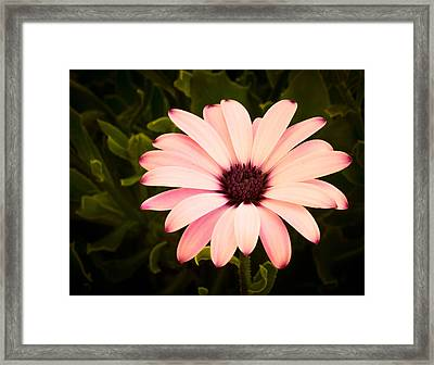 Beautiful Flower  Framed Print