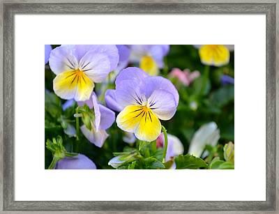 Beautiful Flowers Framed Print by Alex King