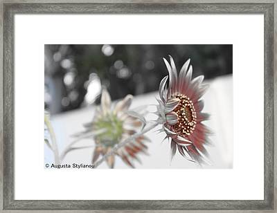 Beautiful Flowers Framed Print by Augusta Stylianou
