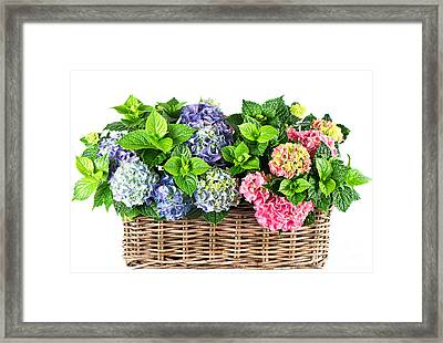 Beautiful Flowers In Basket Framed Print by Boon Mee
