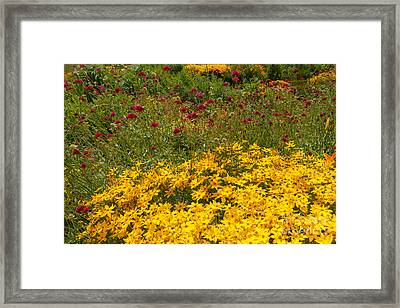 Beautiful Flowers In Gold And Burgundy Framed Print