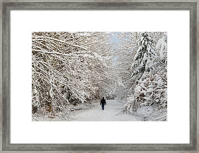 Beautiful Forest In Winter With Snow Covered Trees Framed Print