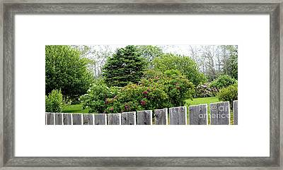 Beautiful Front Yard - Roses - Trees Framed Print