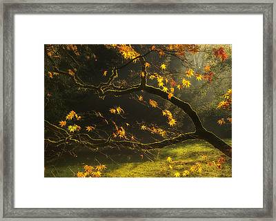 Beautiful Golden Autumn Leaves With Bright Backlighting From Sun Framed Print by Matthew Gibson