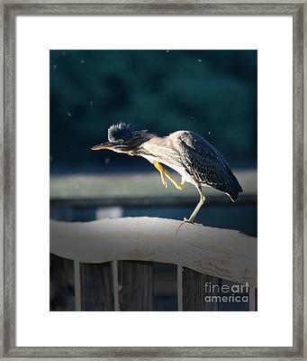 Beautiful Green Heron Framed Print