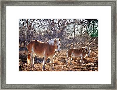 Beautiful Horses Framed Print by James BO  Insogna