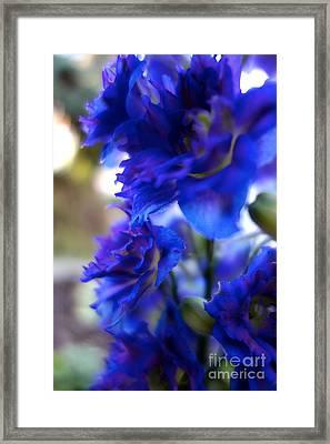 Beautiful In Blue Framed Print