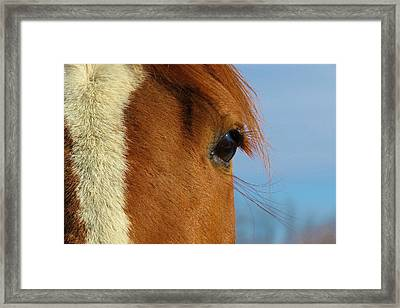 Beautiful Izzy Framed Print