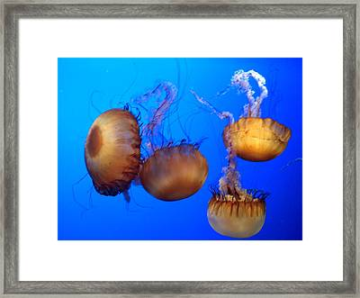 Framed Print featuring the photograph Beautiful Jellyfish by Janice Spivey