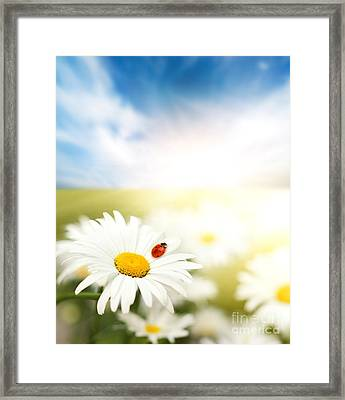 Beautiful Ladybug And Beautiful Flower Framed Print by Boon Mee