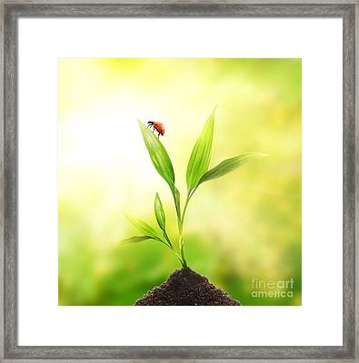 Beautiful Ladybug Framed Print by Boon Mee