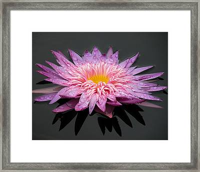 Beautiful Lily Framed Print