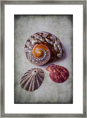 Beautiful Lovely Shells Framed Print by Garry Gay